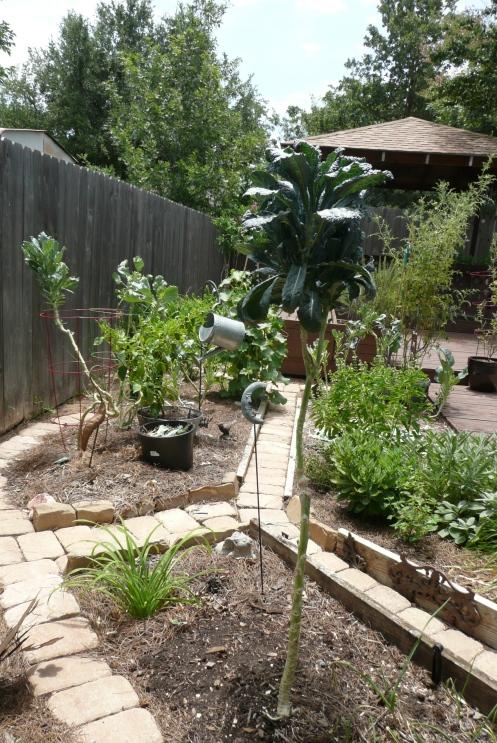 Dinosaur Kale Tree