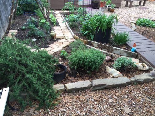 Forward, the herb garden.  Trailing Rosemary, baby Basil,thyme, Greek Oregano & Sage.