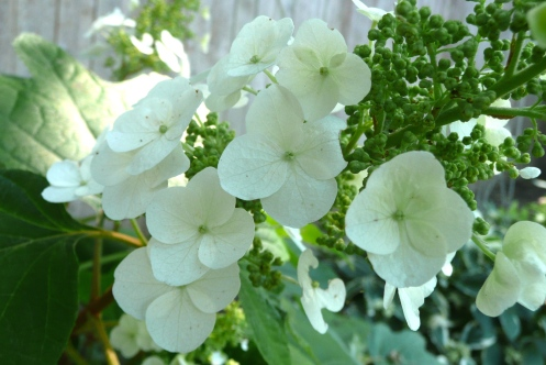 Delicate and promising, a profusion~intrusion within this week.