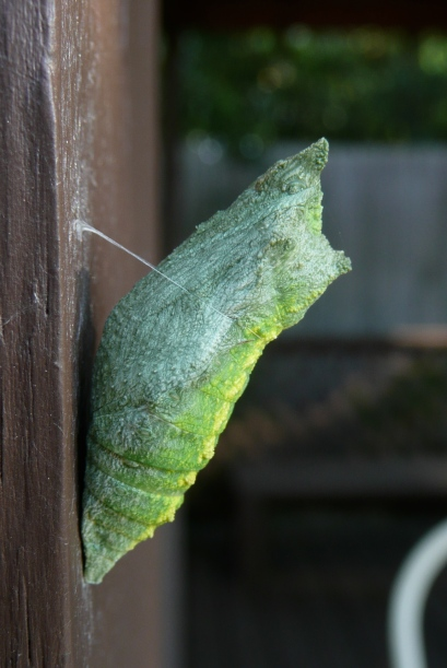 Chrystalis, attached safely to the post of the deck.